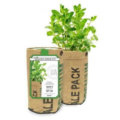 MINT GROW KIT - $9.95